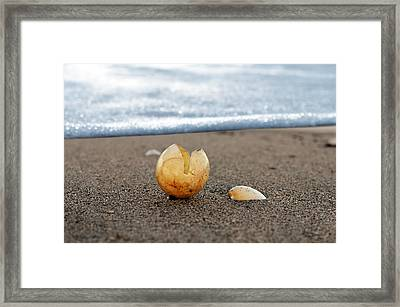 Beginnings Framed Print by Laura Fasulo