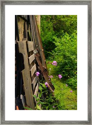 Behind The Old Shed Framed Print by Mary Machare