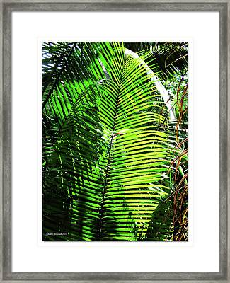 Belize Caracol Jungle Framed Print by Joan  Minchak