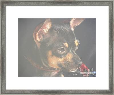Bella Framed Print by Greg Patzer