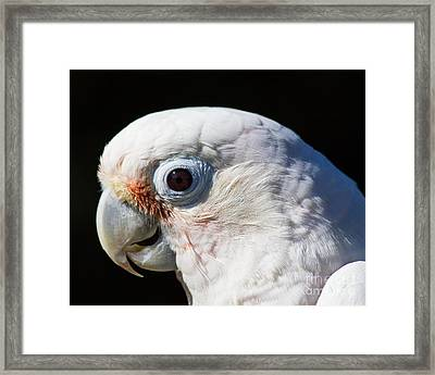 Bella On Black Framed Print by Deanna Wright