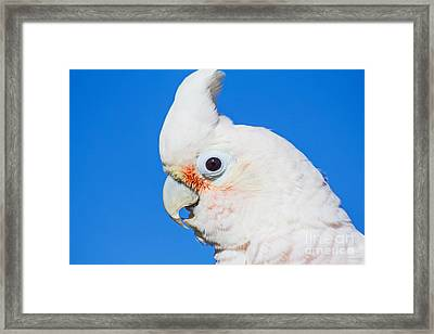 Bella's Closeup Framed Print by Deanna Wright