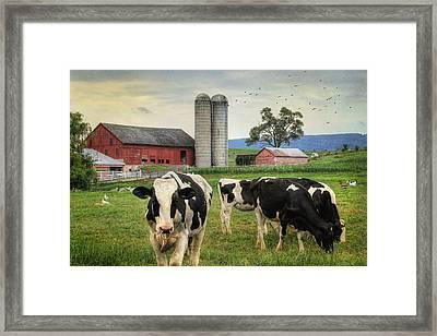Belleville Amish Farm Framed Print by Lori Deiter