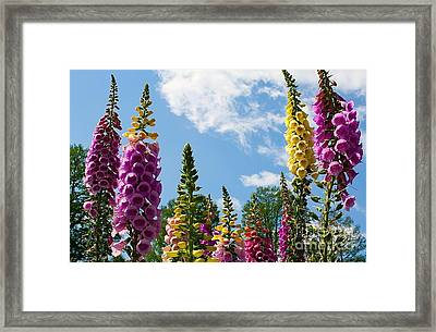 Bells Against The Sky Framed Print by Terry Weaver