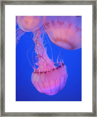 Below The Surface 2 Framed Print by Jack Zulli