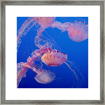 Below The Surface 3 Framed Print by Jack Zulli