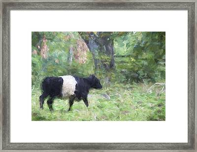 Belted Galloway Cow Painterly Effect Framed Print by Carol Leigh