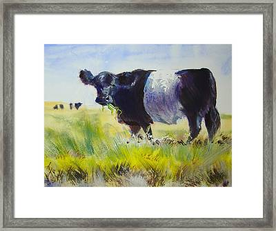 Belted Galloway Cow Framed Print by Mike Jory