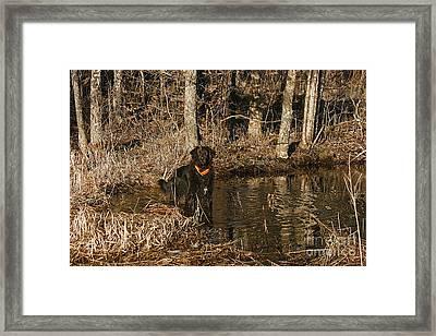 Ben Framed Print by Cindi Ressler