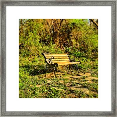 Bench At The Pond  Framed Print by Andrew Martin