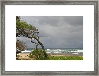 Bending Over Backwards In Barbados Framed Print by Willie Harper