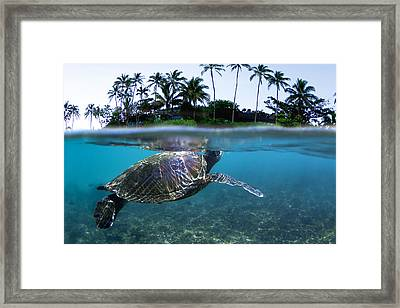 Beneath The Palms Framed Print by Sean Davey