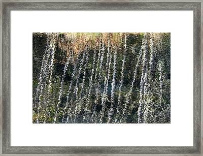 Beneath The Reflection Framed Print by Roxy Hurtubise