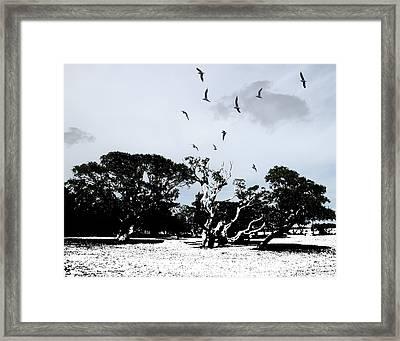 Bent Trees Framed Print by Joseph Tese