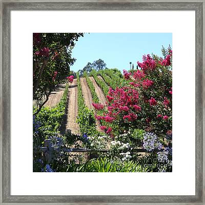Benziger Winery In The Sonoma California Wine Country 5d24495 Square Framed Print by Wingsdomain Art and Photography