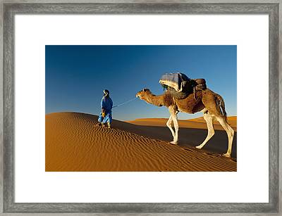 Berber Leading Camel Across Sand Dune Framed Print by Ian Cumming