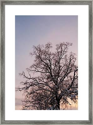Bergen  Winter Tree Framed Print by Hakon Soreide