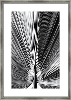 Bermuda Palmetto Monochrome Framed Print by Tim Gainey