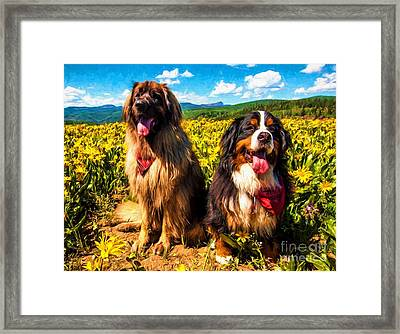 Bernese Mountain Dog And Leonberger Among Wildflowers Framed Print by Gary Whitton