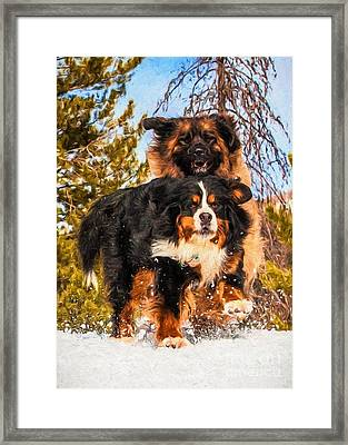 Bernese Mountain Dog And Leonberger Winter Fun Framed Print by Gary Whitton