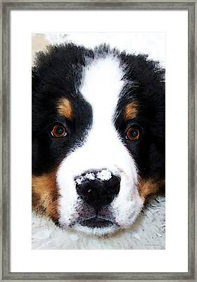 Bernese Mountain Dog - Baby It's Cold Outside Framed Print by Sharon Cummings