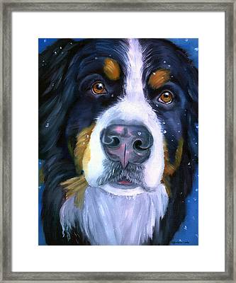 Bernese Mountain Dog In Snowfall Framed Print by Lyn Cook