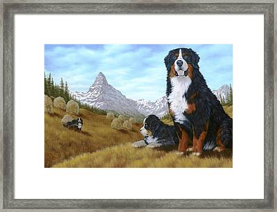 Bernese Mountain Dog Framed Print by Rick Bainbridge