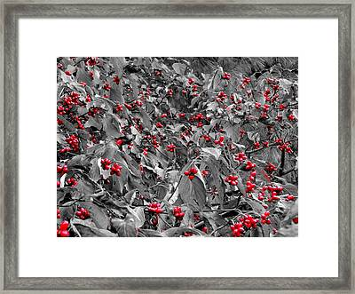Berries Framed Print by Dan Sproul