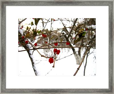 Berries Framed Print by Michael Fitzpatrick