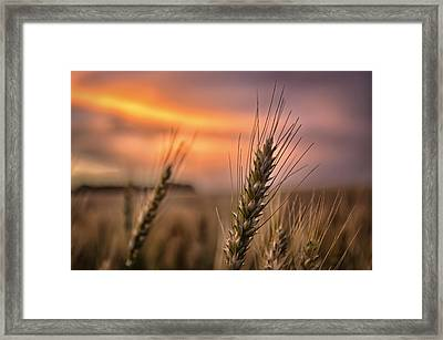 Berry Beauty Framed Print by Thomas Zimmerman