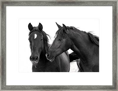Best Buds Wild Mustang Framed Print by Rich Franco