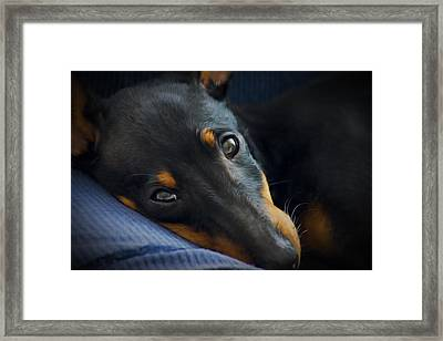 Best Friend Framed Print by Aged Pixel