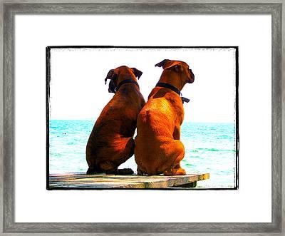 Best Friends Dog Photograph Fine Art Print Framed Print by Laura  Carter