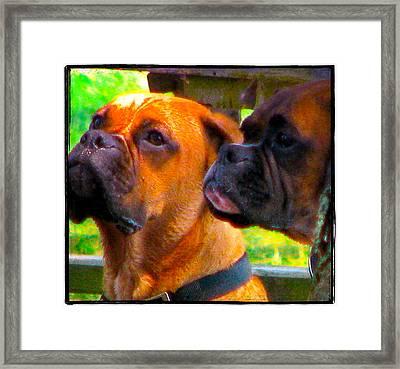 Best Friends Dog Photograph Framed Print by Laura  Carter