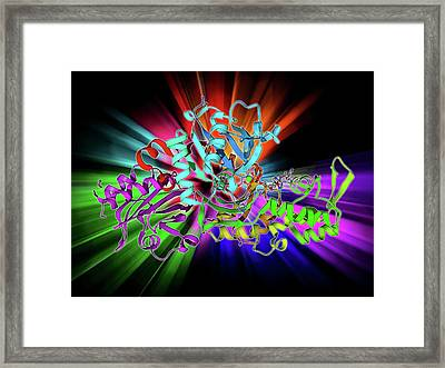 Beta-actin Molecule Framed Print by Laguna Design