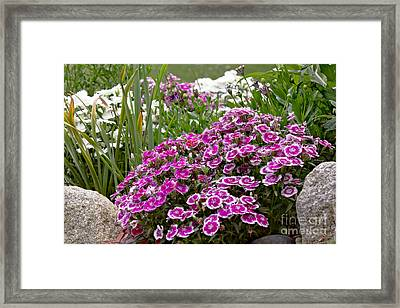 Between A Rock And A Hard Place Framed Print by Timothy J Berndt