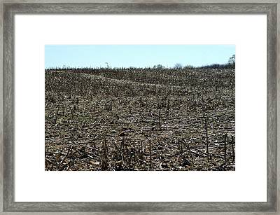 Between Sky And Field Framed Print by Joseph Yarbrough