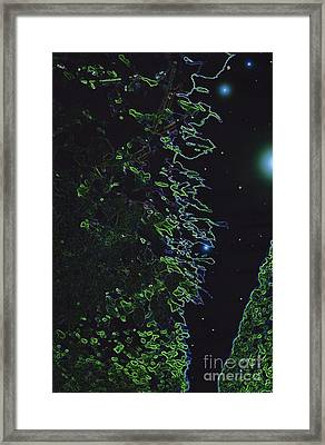 Between The Hedges  Framed Print by First Star Art