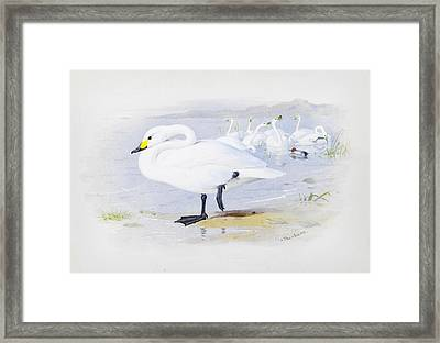 Bewicks Swan Framed Print by Celestial Images