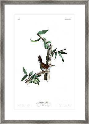 Bewick's Wren By John James Audubon Framed Print by Pablo Romero