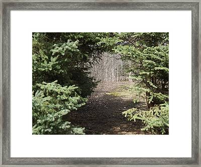 Beyond The Beaten Path Framed Print by Brenda Brown
