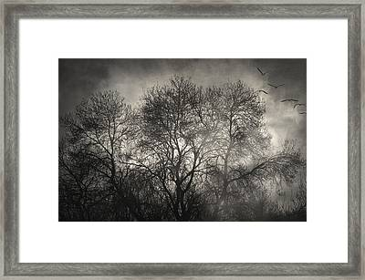 Beyond The Morning Framed Print by Taylan Soyturk