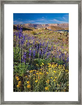Big Bend Flowers Framed Print by Inge Johnsson