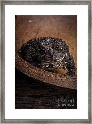Big Black Toad Framed Print by Edward Fielding