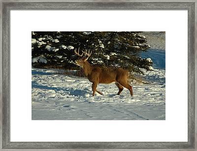 Big Boy In Early Winter Framed Print by Sandra Updyke