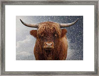 Big Bull Framed Print by Joachim G Pinkawa