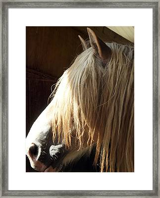 Big Duke Framed Print by Lynda Dawson-Youngclaus