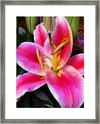 Big Pink Framed Print by Bill Caldwell -        ABeautifulSky Photography
