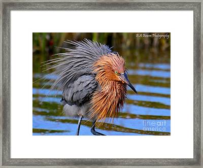 Big Red All Fuzzed Out Framed Print by Barbara Bowen