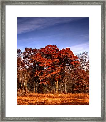 Big Red Framed Print by Thomas Young